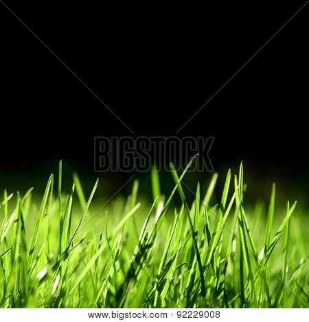 grass over black background, swallow depth of field