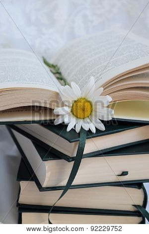 book with a daisy