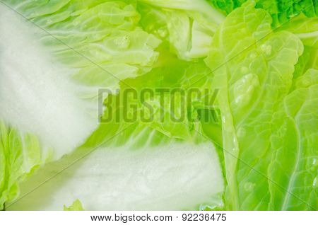 Close-up Of Chinese Cabbage In Water