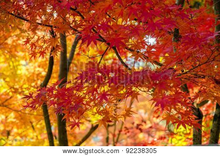 Colorful Autumn, Red, Orange And Gold Leaf Background