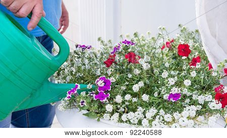 Watering A Flower Bed