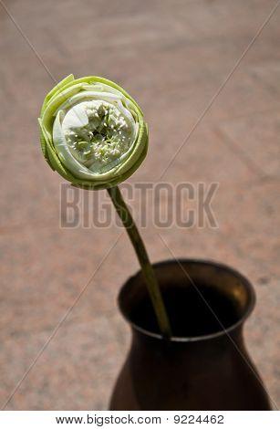 lotus in vase