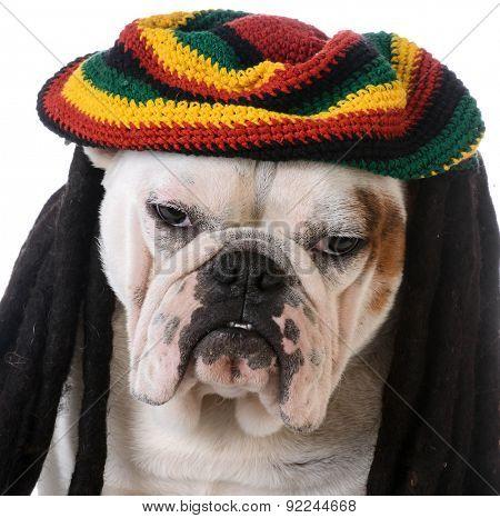 funny dog with dreadlocks - bulldog