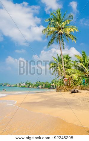 Exotic palm trees and sandy beach