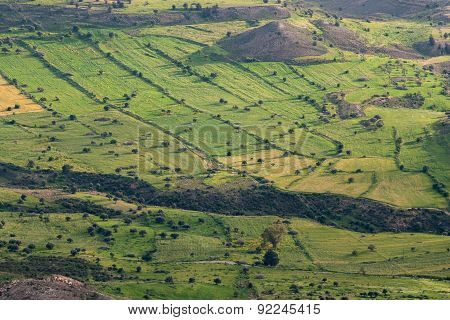Countryside  Agriculture Land With Green Fields