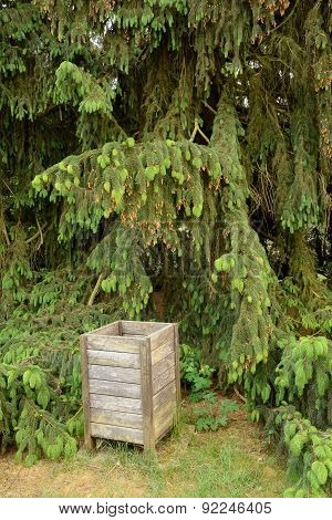 Old Wooden Dustbin At Pine
