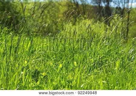 Grass Scenery On The Field