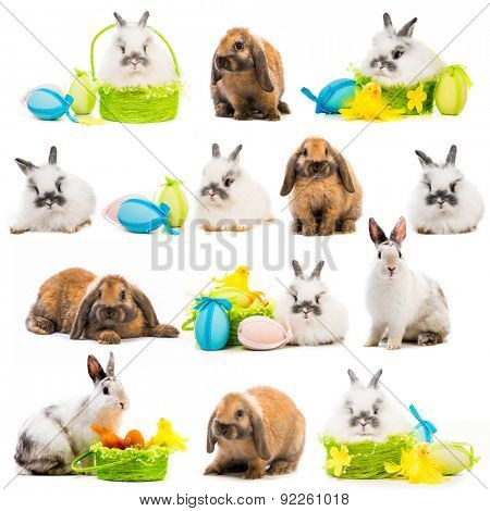 photo collage rabbit Easter eggs in a basket on a white background