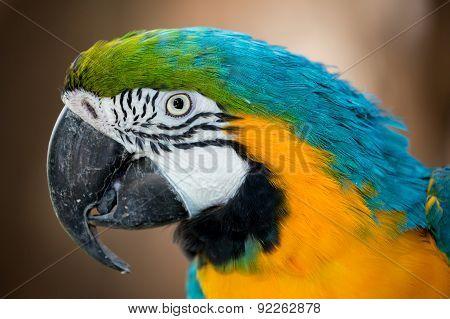 Pretty Macaw Parrot Portrait