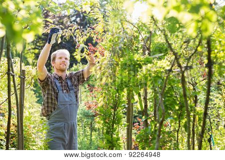 Man clipping branch in garden