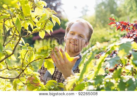 Gardener examining leaves on branch at garden