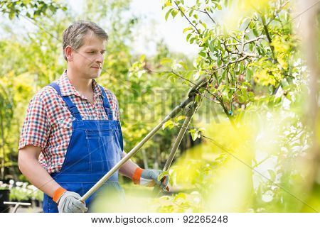 Gardener trimming tree branches at plant nursery