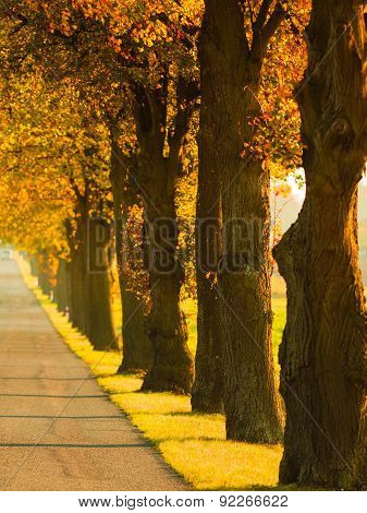 Road Running Through Tree Alley. Autumn