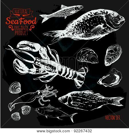 Vector Illustration  On Blackboard. Hand Drawing Set Of Seafood.