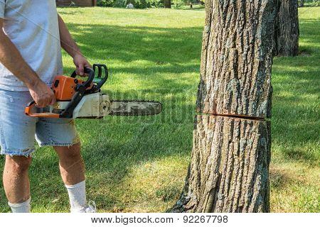 Man holding chain saw next to tree with partial cut