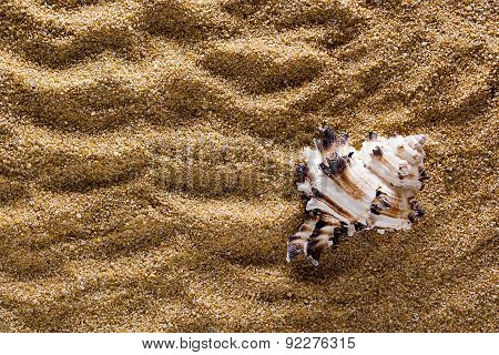 Background Of Sand With Shell
