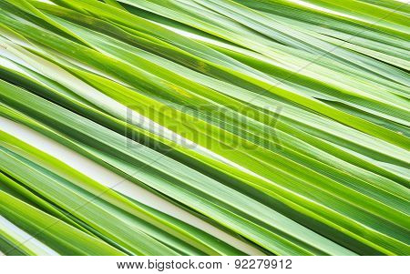 Pattern Of Green Fresh Lemongrass Leaf