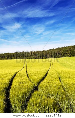 Deep and visible forking tractors tracks in a wheat field. Conceptual image for choosing a path.
