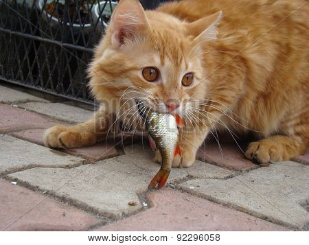 Cat Eats The Fish