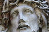 picture of thorns  - Jesus Christ in a crown of thorns  - JPG