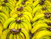 pic of bunch bananas  - Bunches of ripe bananas on the market - JPG