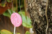 stock photo of valentine candy  - Candy valentines on a tree in the garden - JPG
