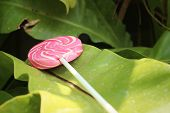 foto of valentine candy  - Candy valentines on green leaves at the garden - JPG