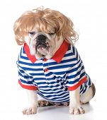 image of wig  - humanized dog dressed with wig and shirt on white background - JPG