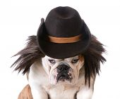 pic of wig  - funny dog wearing western hat and wig on white background - JPG