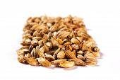 picture of malt  - Malt grains - JPG