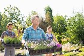 picture of plant pot  - Male and female gardeners carrying crates with flower pots at plant nursery - JPG