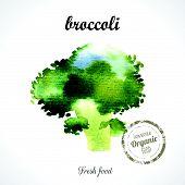 picture of turnip greens  - Watercolor green broccoli - JPG