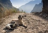 foto of eat grass  - Portrait of a goat eating a grass on a green meadow - JPG
