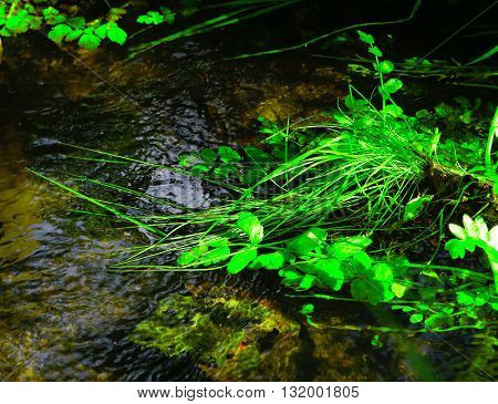 green plants swaying in the clean and clear stream