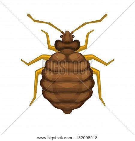 Bug Bedbug on White Background. Vector illustration