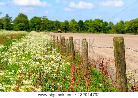 Landscape With Weed In Spring Time