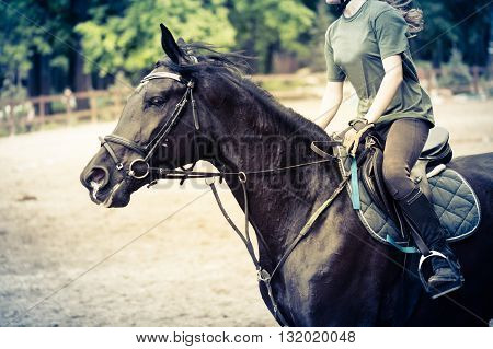 girl sportsman rides on horse training outdoors