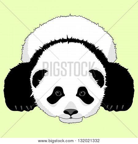 panda bear lying face realistic green background