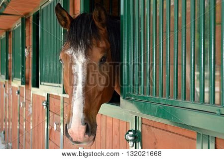 Horse holding head from the stables - portrait