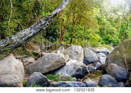Mysterious Thai jungle in the Khao Sok National Park Surat Thani Province Thailand.