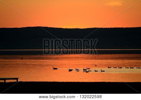 Light orange sunset - swimming in the lake grey goose - austria