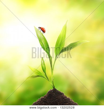 Ladybug sitting on a young plant