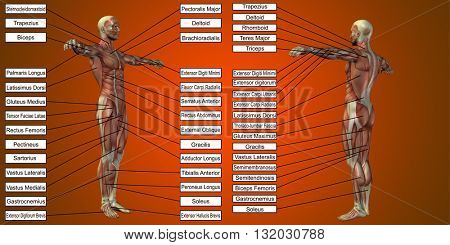3D illustration of a concept or conceptual 3D human man anatomy and muscle for sport and text on red background
