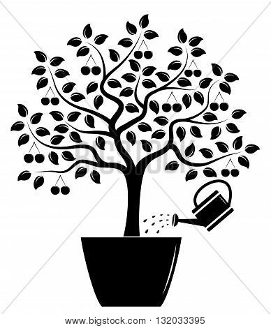 vector cherry tree in pot and watering can isolated on white background
