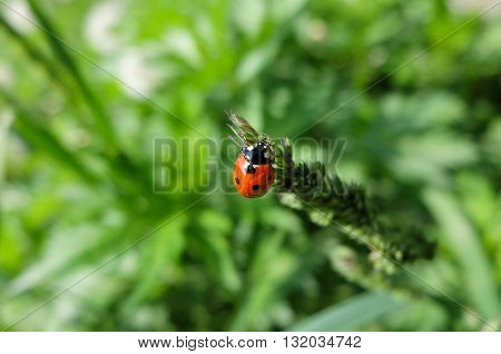 Cute red ladybug, cute beautiful insect. The insect specks.