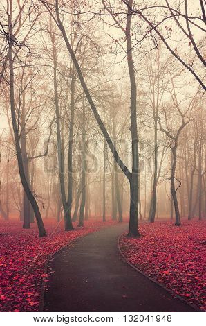 Colorful autumn landscape - lonely walkway in the autumn deserted park in foggy weather. Vintage and creative filter applied