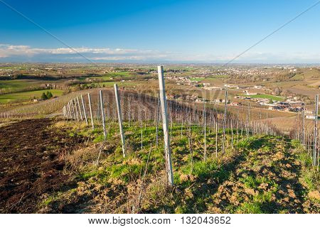 Vineyards in the hills of Oltrepo' Pavese in late autumn