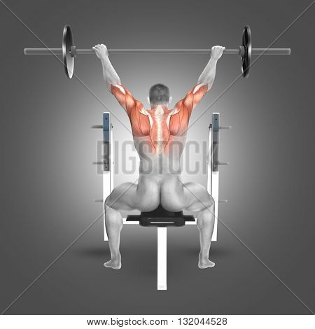 3D render of a male figure in seated barbell press with arms raised position with muscles used highlighted