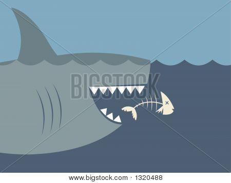Shark10