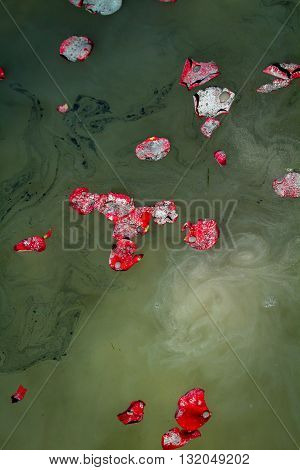 Rose petals float on lake water along with the scattered ashes of a loved one.